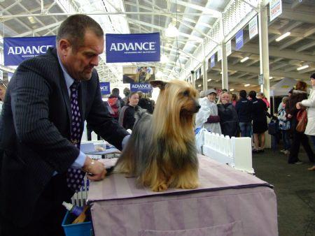 Balkana Australian Silky Terriers